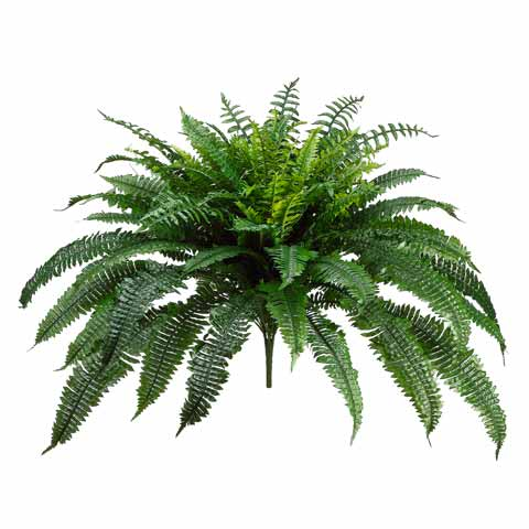 50 Inch Silk Boston Fern Unpotted