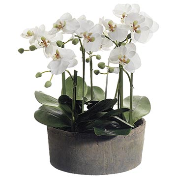 The Best Orchid Arrangements Of 2017 Top Rated Orchid