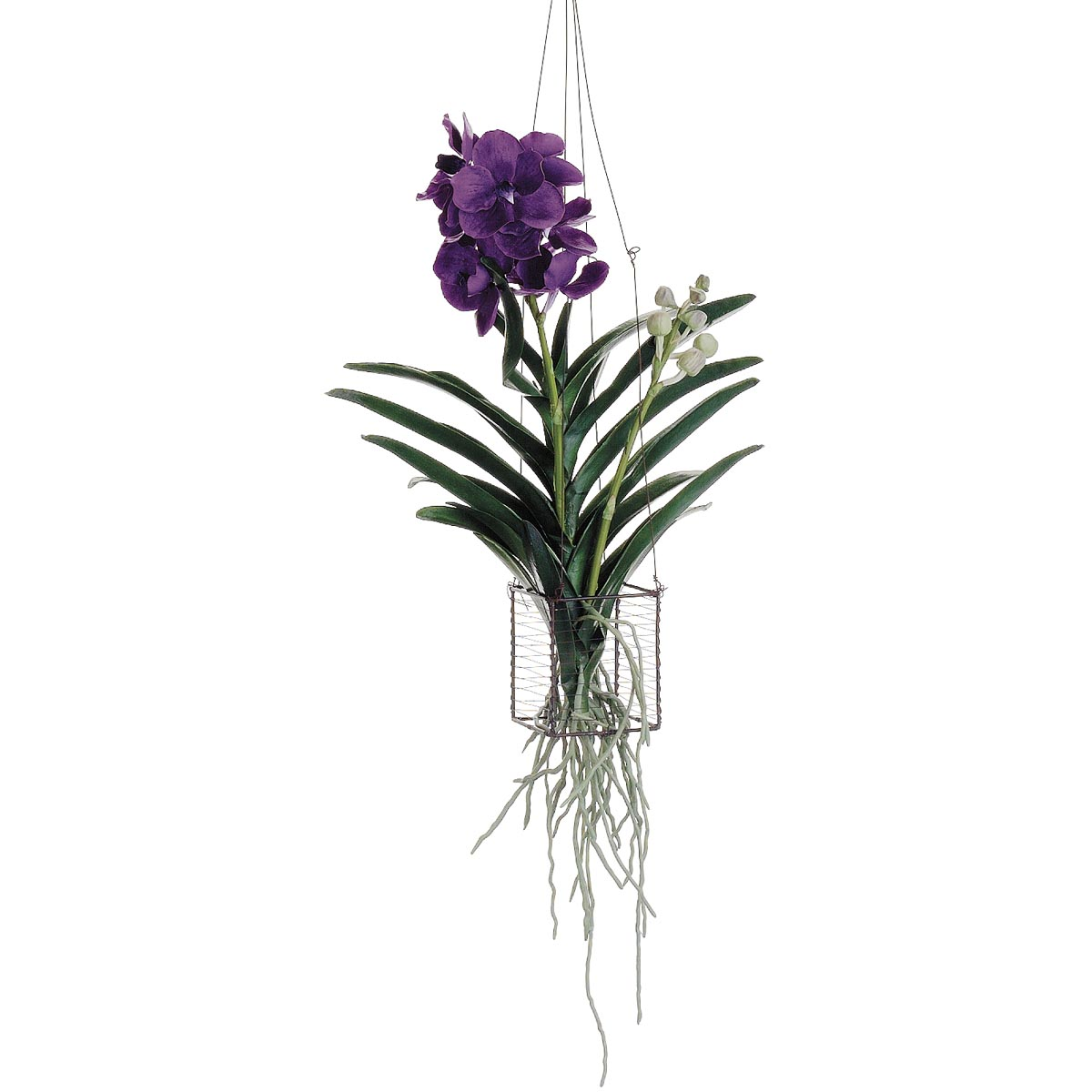 22 Inch Vanda Orchid Hanging Plant In Wire Basket Lho295 Vi