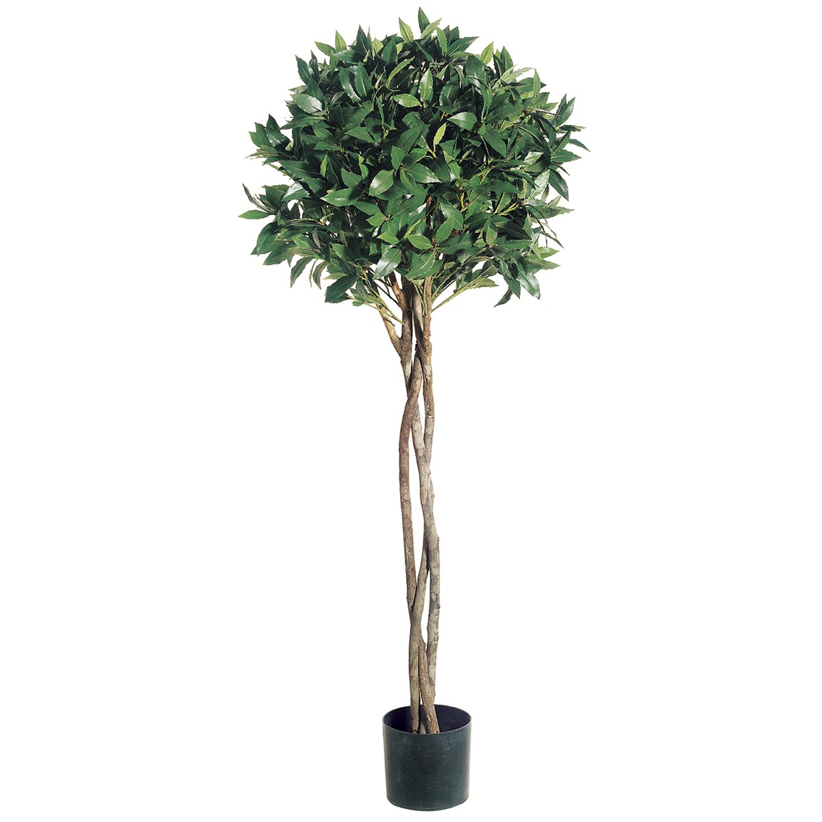 4 Foot Bay Leaf Topiary With Braided Trunk: Limited Uv (set Of 2)