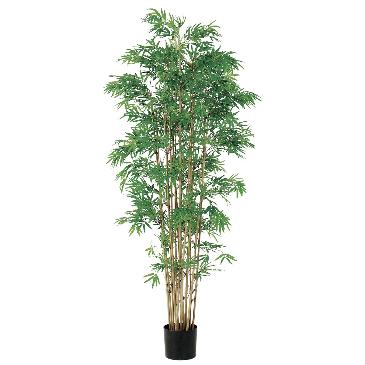 6 foot Japanese Bamboo Tree: Potted | LPB052-GR/TT