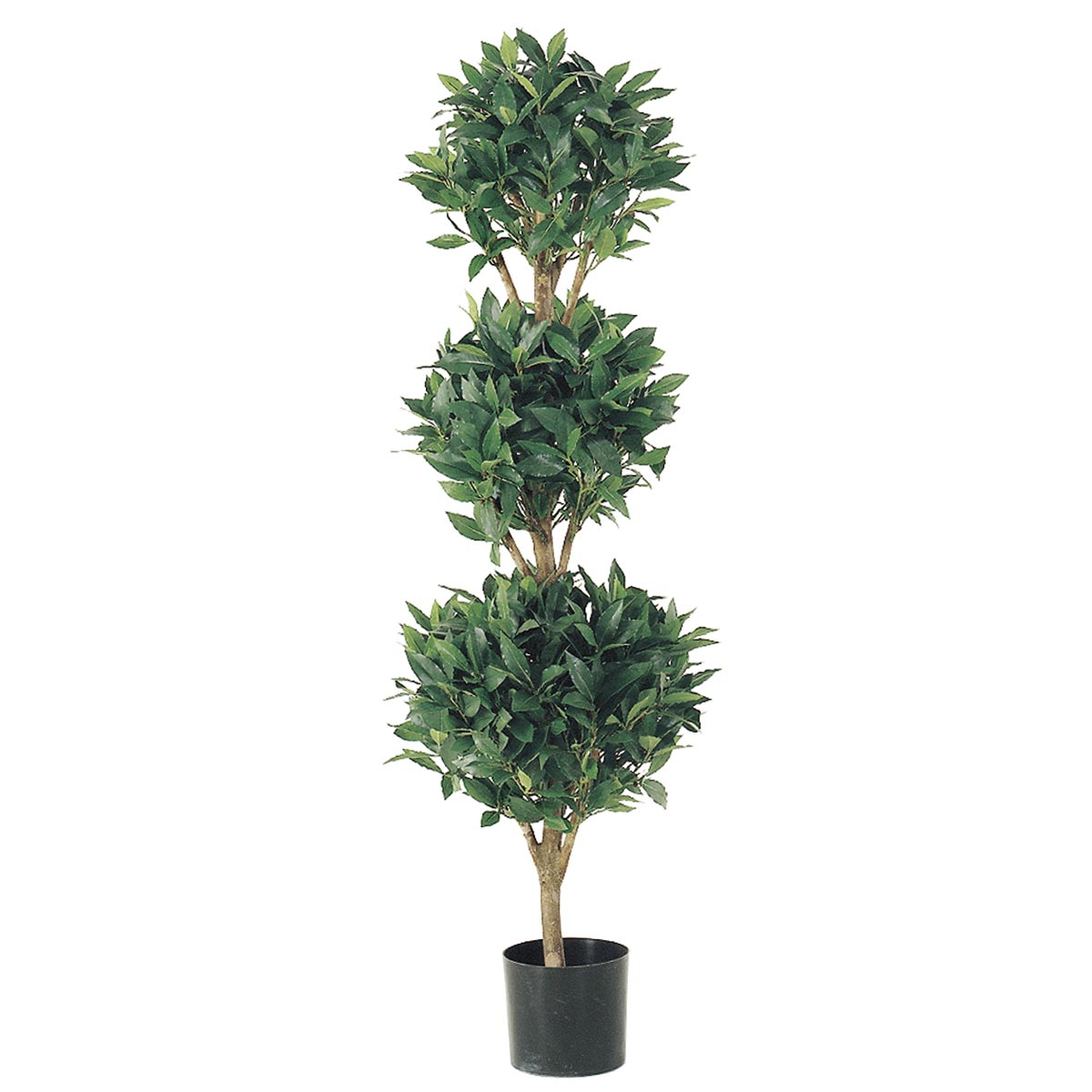 4 Foot Triple Ball Sweet Bay Topiary: Limited Uv