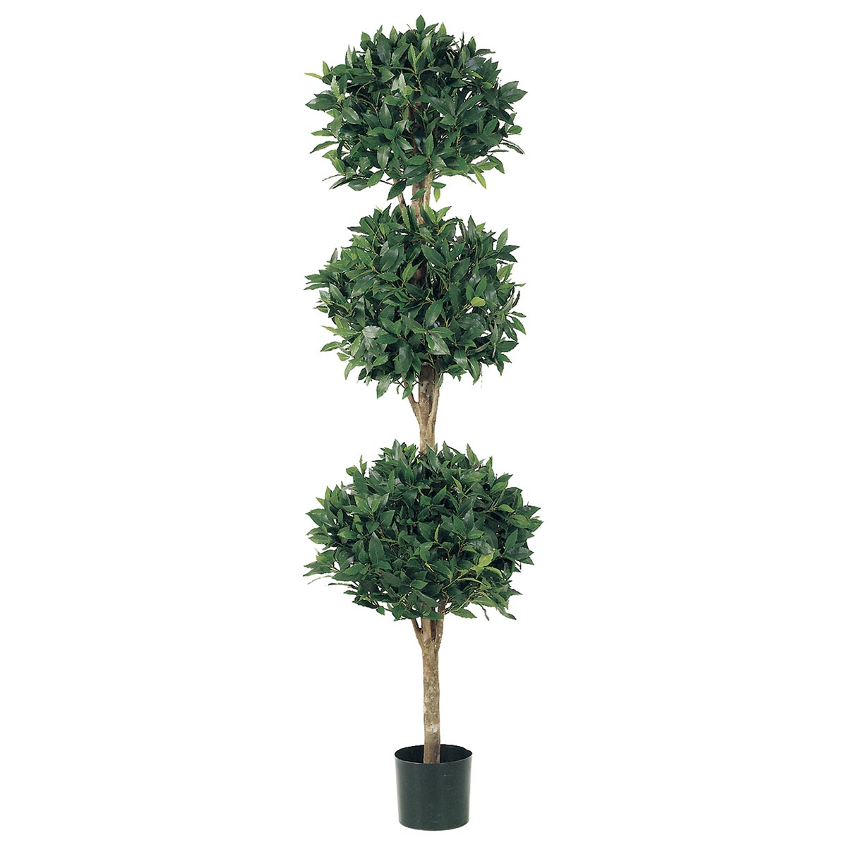 Choose Triple Ball Sweet Bay Topiary Limited Uv 9 1669