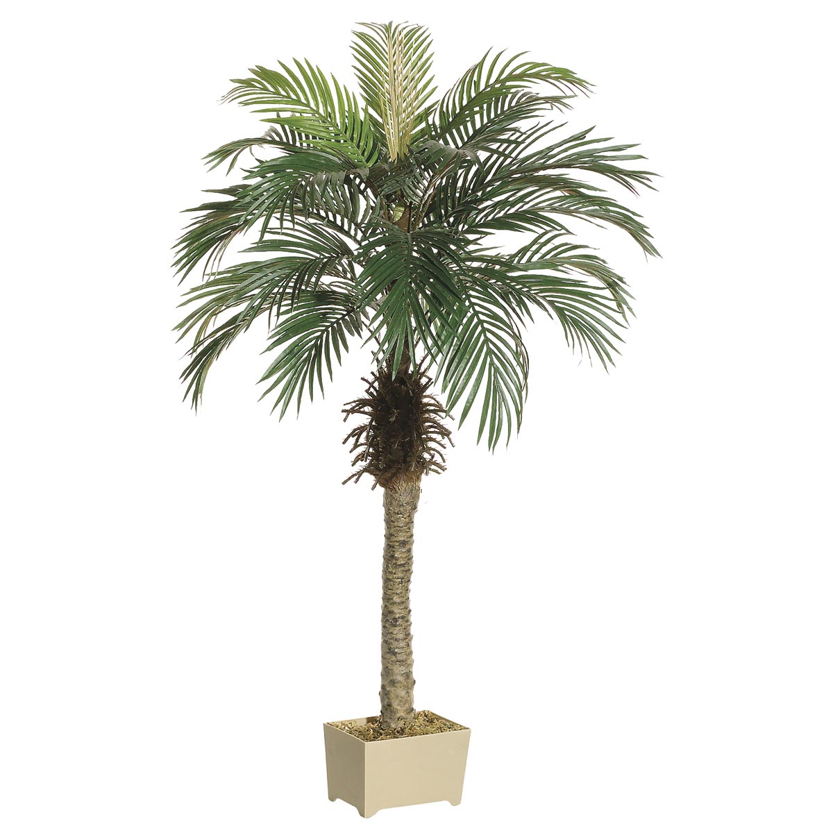 4.5 Foot Phoenix Palm Tree In Decorative Pot
