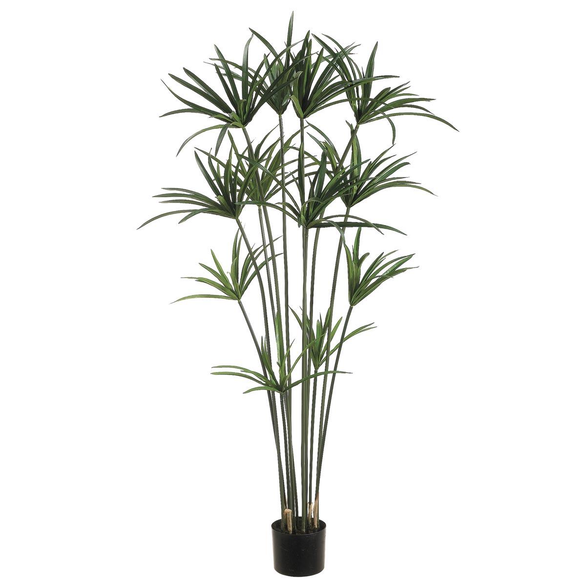 5 foot papyrus plant potted ltp195 gr. Black Bedroom Furniture Sets. Home Design Ideas