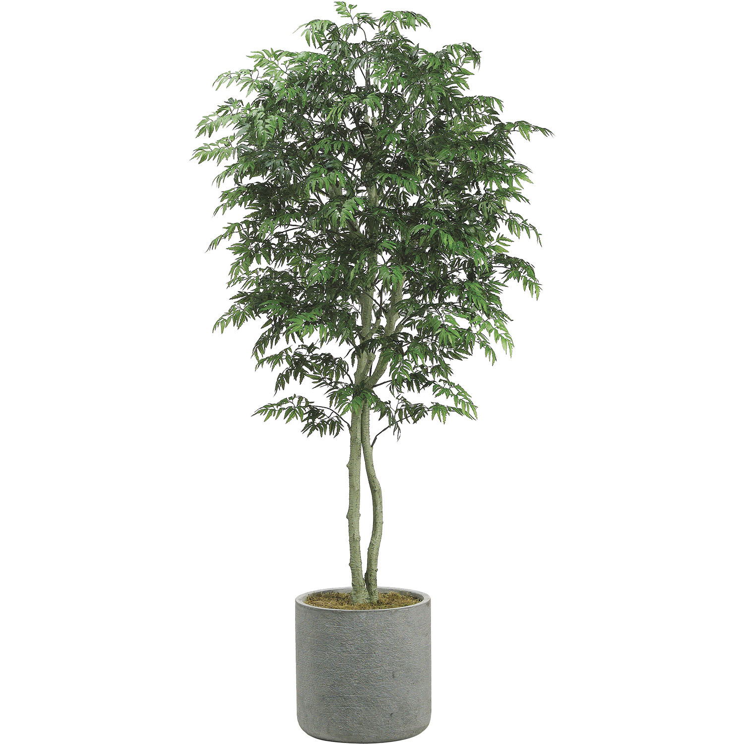 Valuable Artificial Aralia Tree Fiberstone Container Product Photo