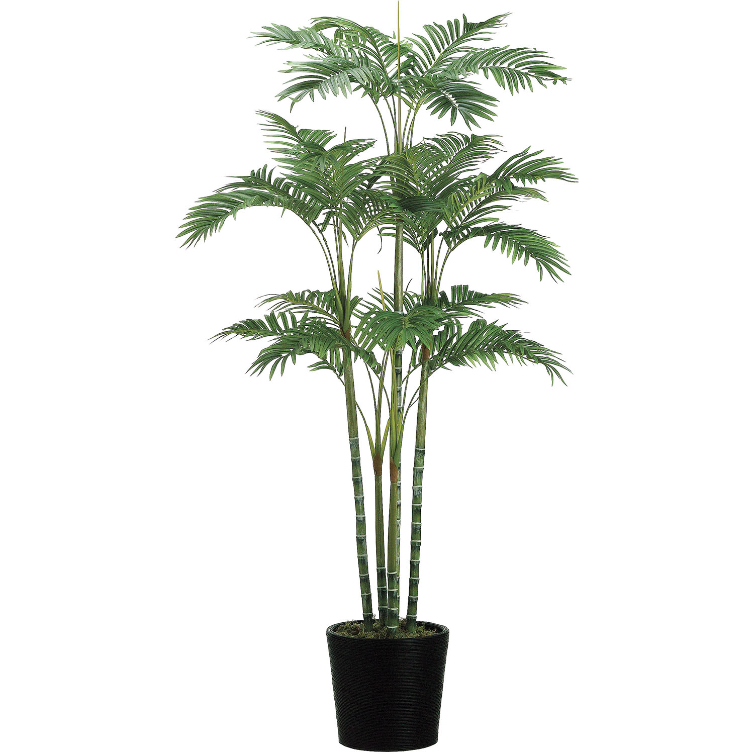 Select Artificial-Areca-Palm-Bamboo-Container Product Picture 2390