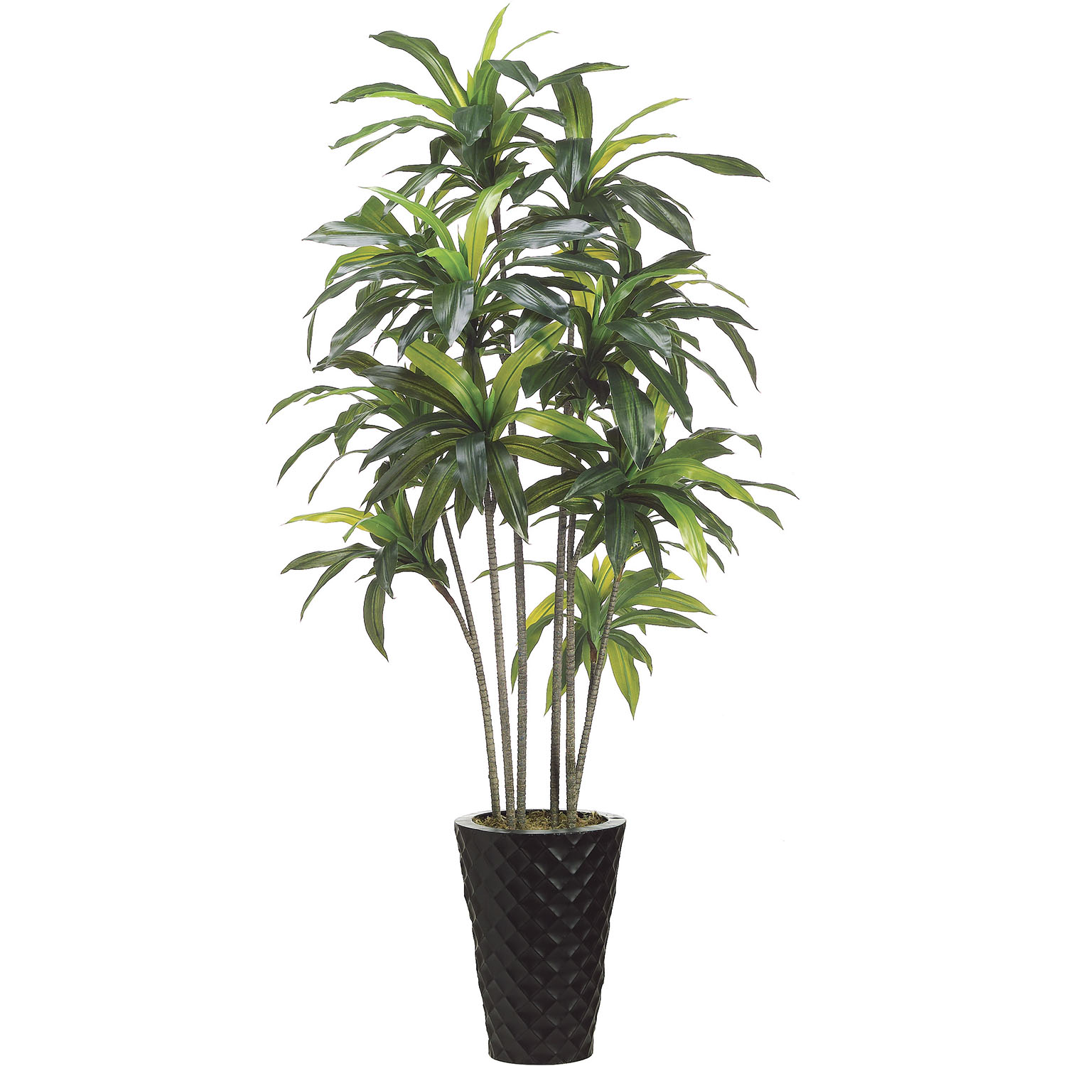 Order Exotic Artificial Dracaena Tree Metal Container Product Photo
