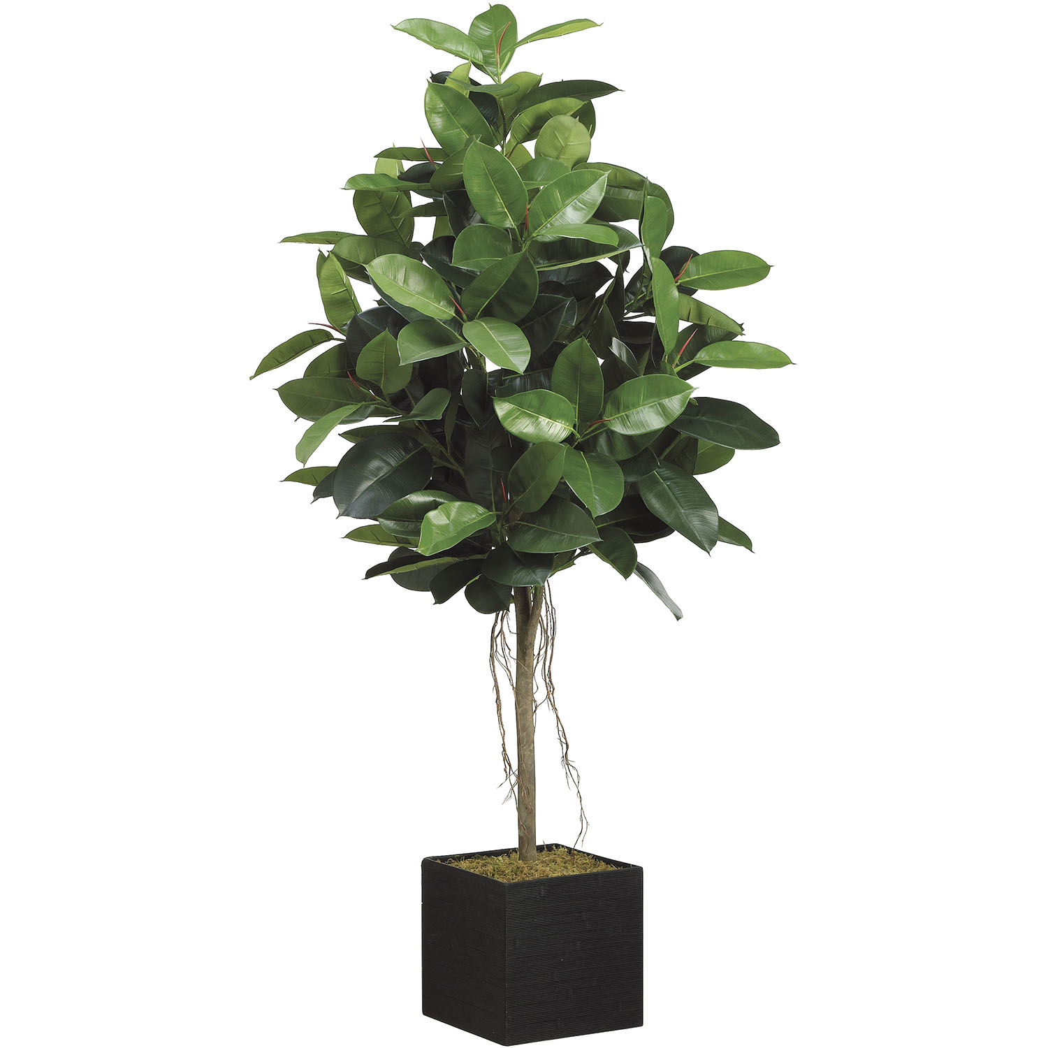 Choose Artificial Rubber Tree Bamboo Container 11 1669