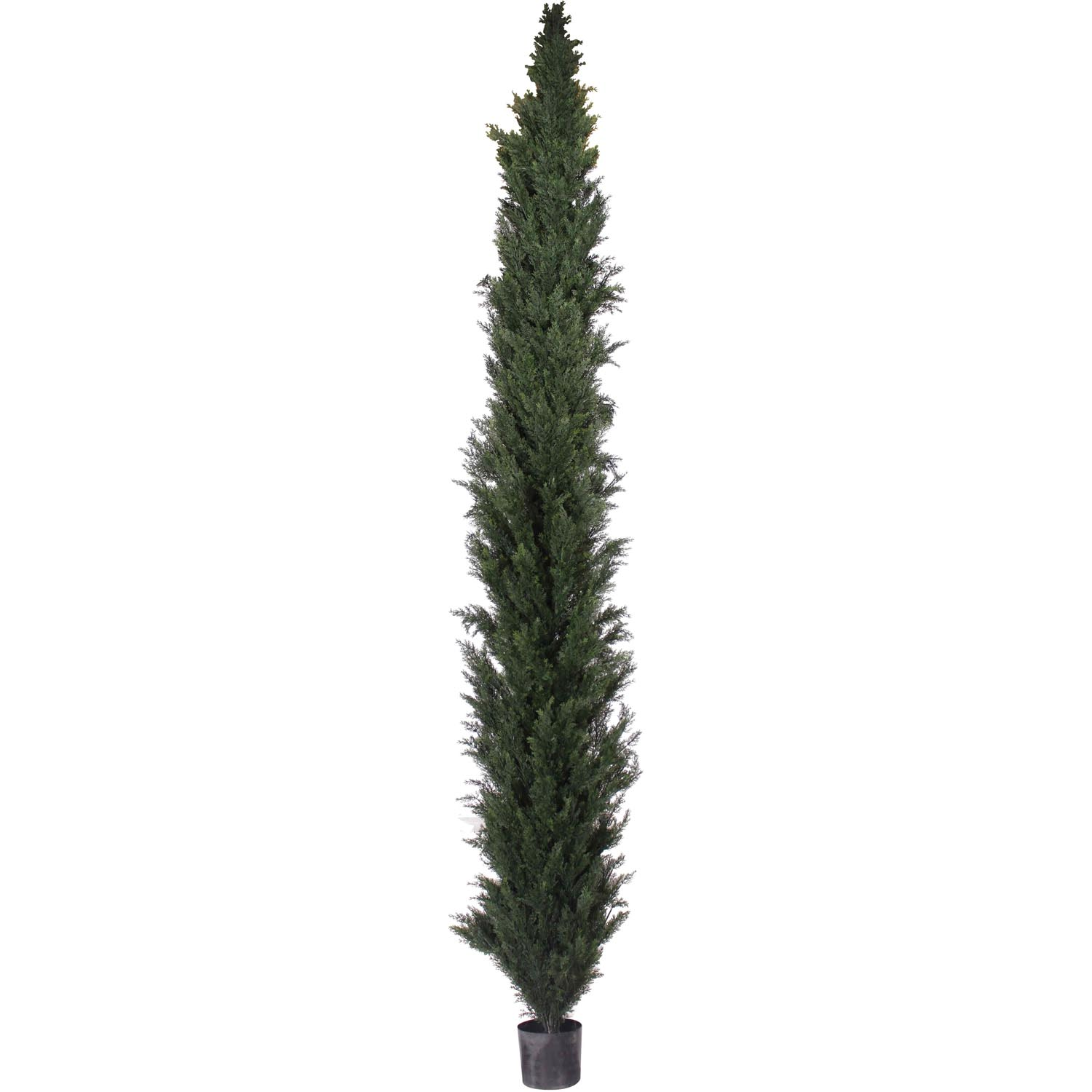 10 Foot Slim Uv Protected Cedar Pine Tree: Potted