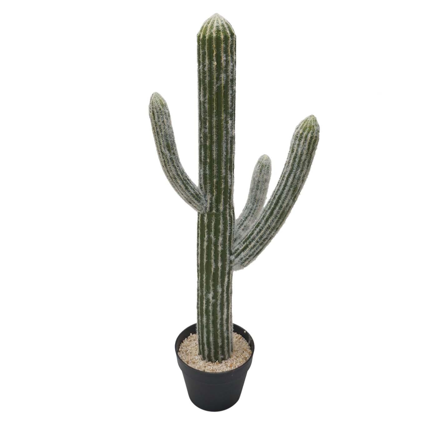 32 Inch Cereus Cactus: Potted