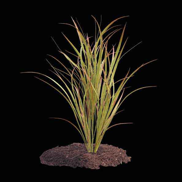 48 Inch Artificial Outdoor Savannah Grass: Unpotted - Overstock