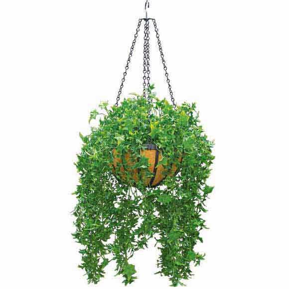 Serious Artificial Outdoor English Ivy Decorative Hanging Basket Chain Product Photo