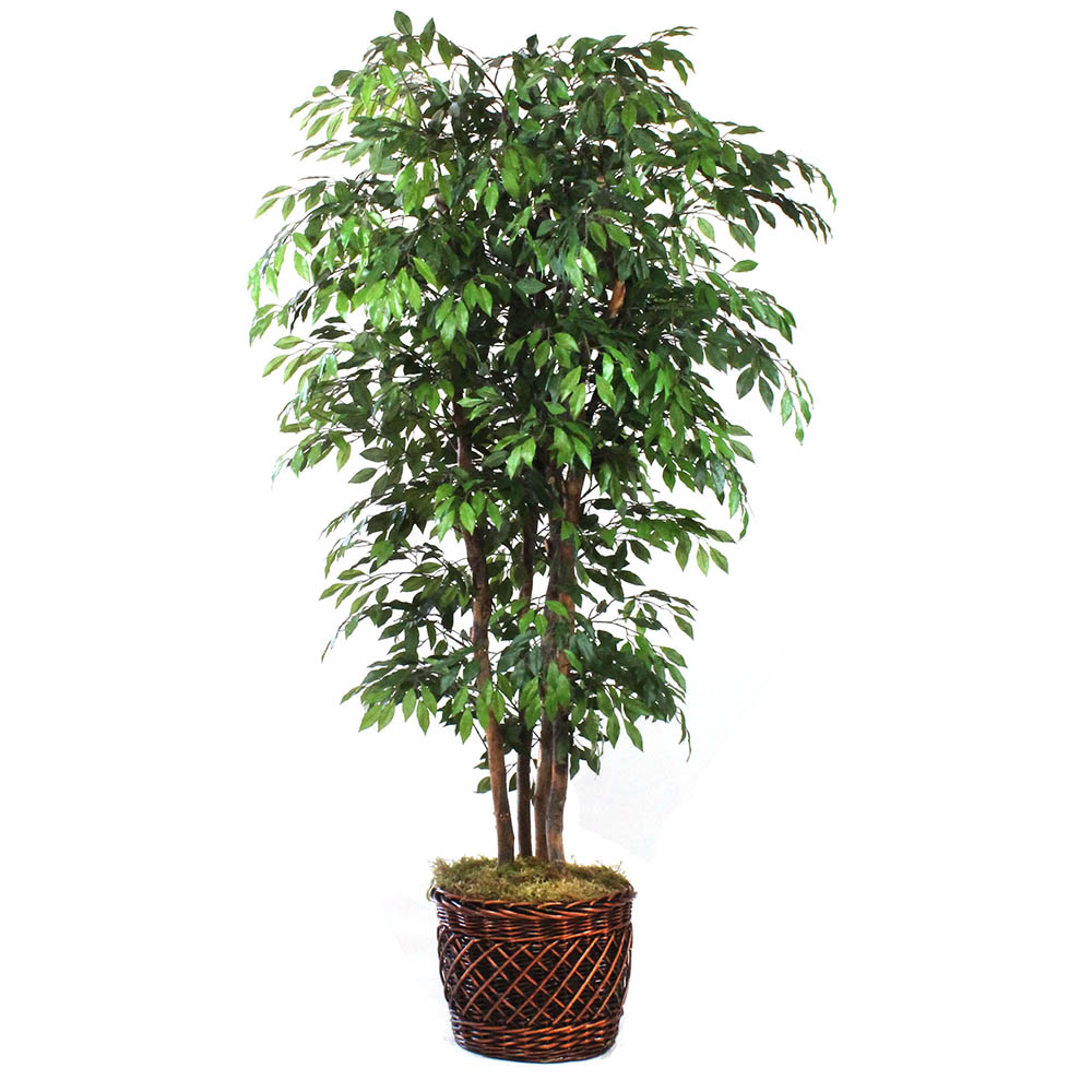 fake ficus tree dalmarko designs 8 foot artificial ficus tree in 3659