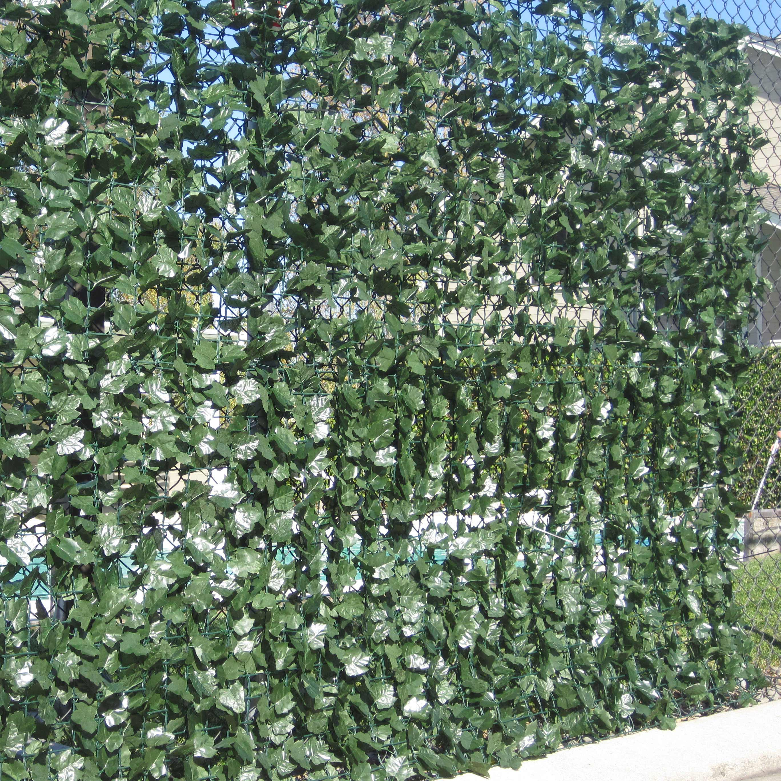 Outdoor Ivy Plant Types submited images