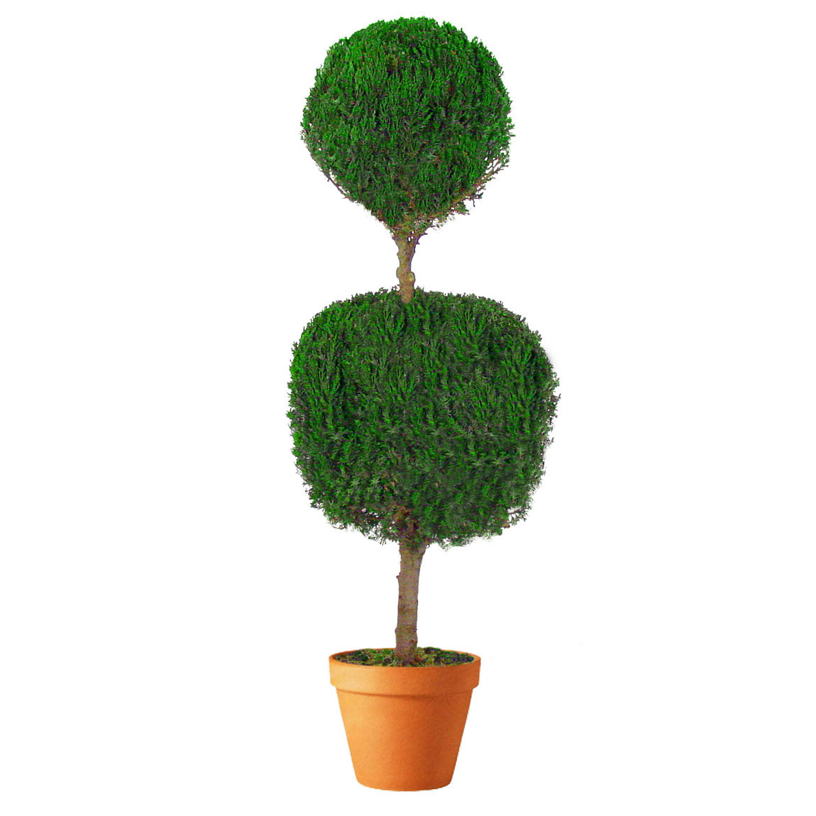 Unique Preserved Double Ball Topiary 10 2401