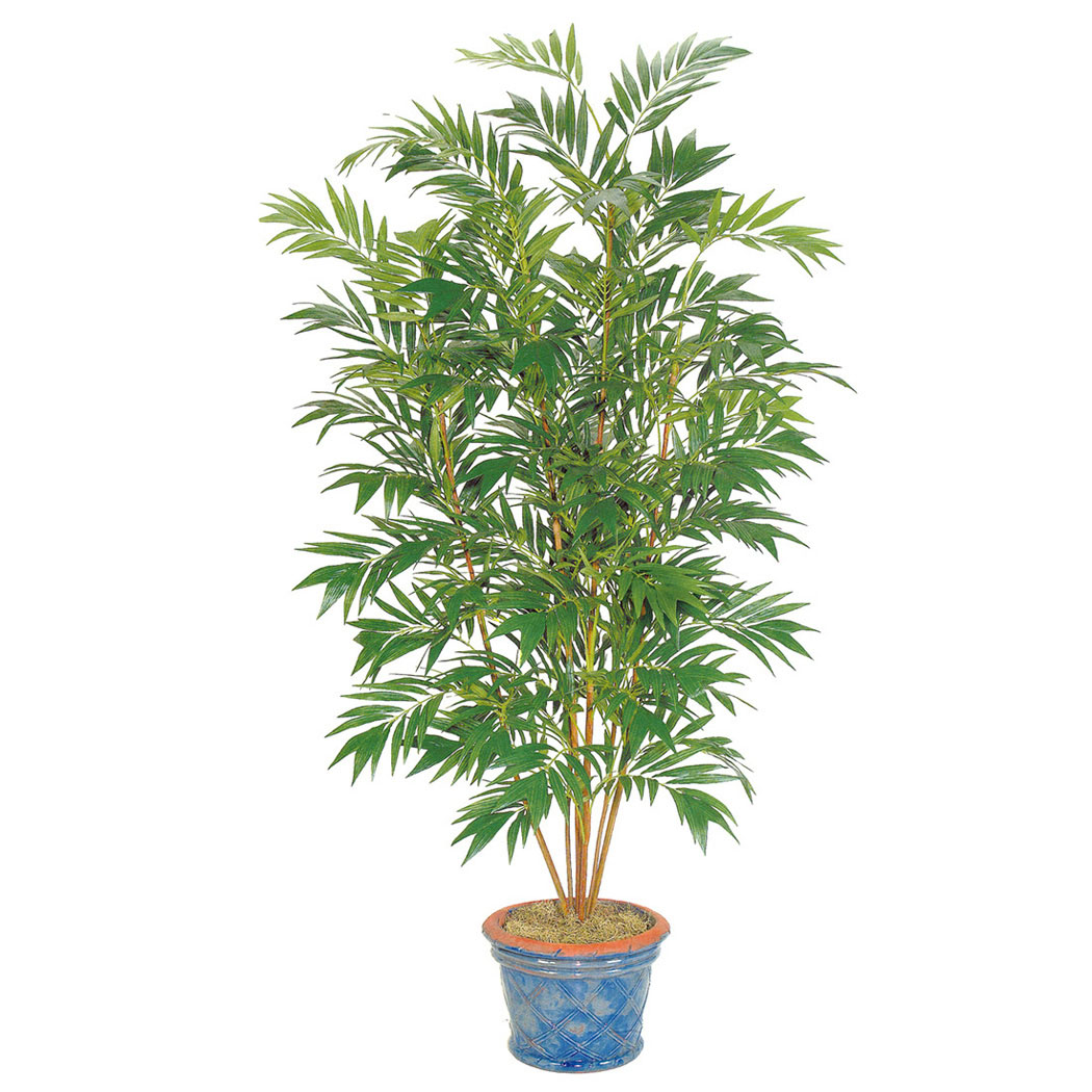 Indoor Palm Plants http://www.artificialplantsandtrees.com/FRI1337.html