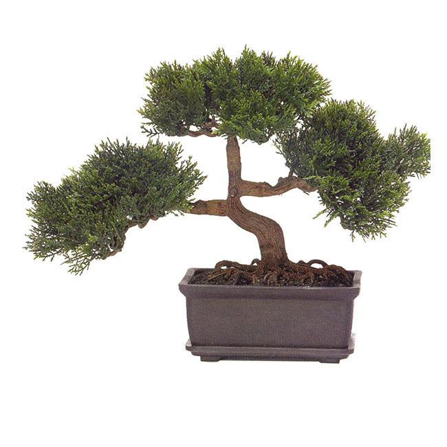 9 inch cedar bonsai bonsai tree office table