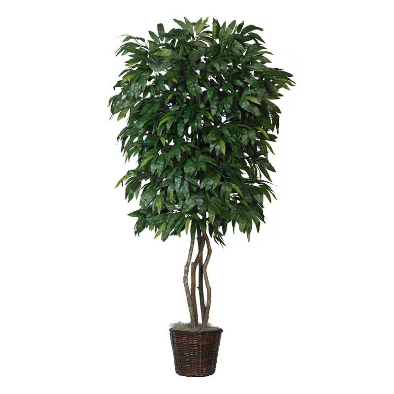 Design Mango Tree Natural Trunks Potted Overstock Product Photo