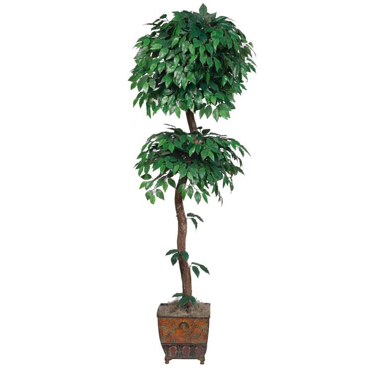 6.5 foot Ficus Tree with Natural Trunk: Potted 4113