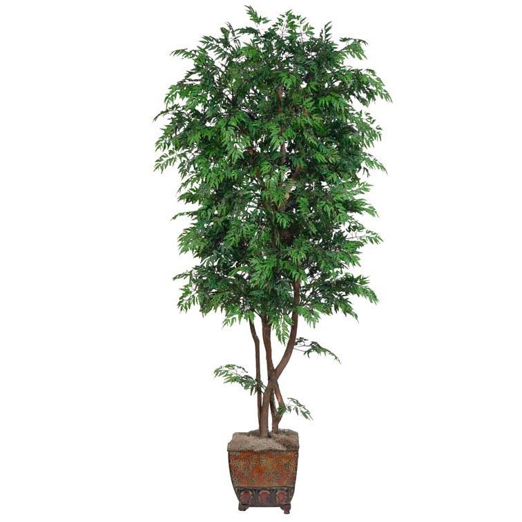 Popular Silk Aralia Tree Natural Trunks Potted 6 634