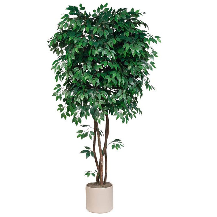 7 5 Foot Artificial Deluxe Ficus Tree With Natural Trunks