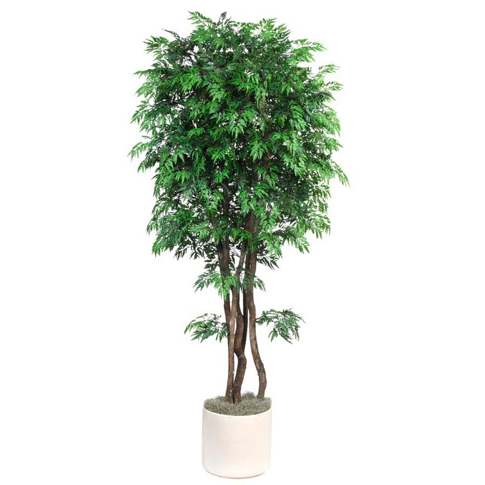 Tasteful Silk Ming Aralia Tree Natural Trunks Potted Product Photo