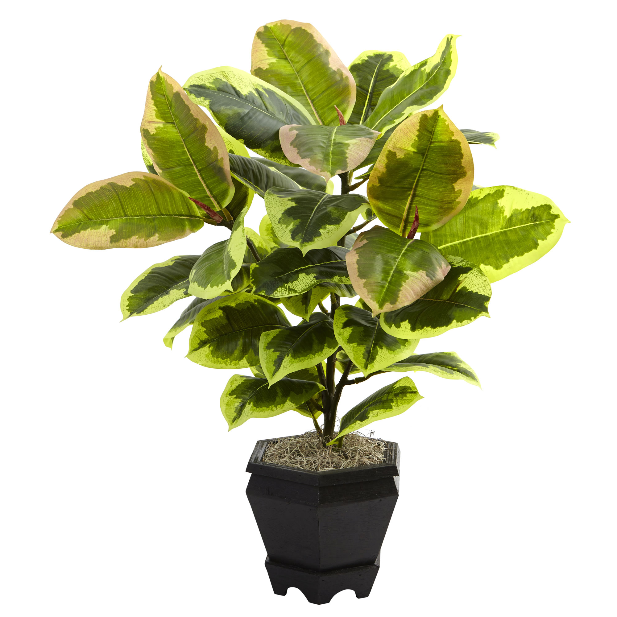 Mini Rubber Plant : Nearly natural inch mini variegated rubber tree in