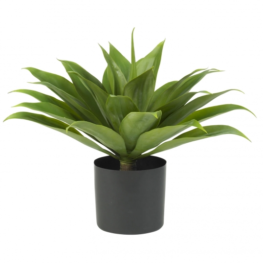 Slim Logo 25 Inch Agave Potted