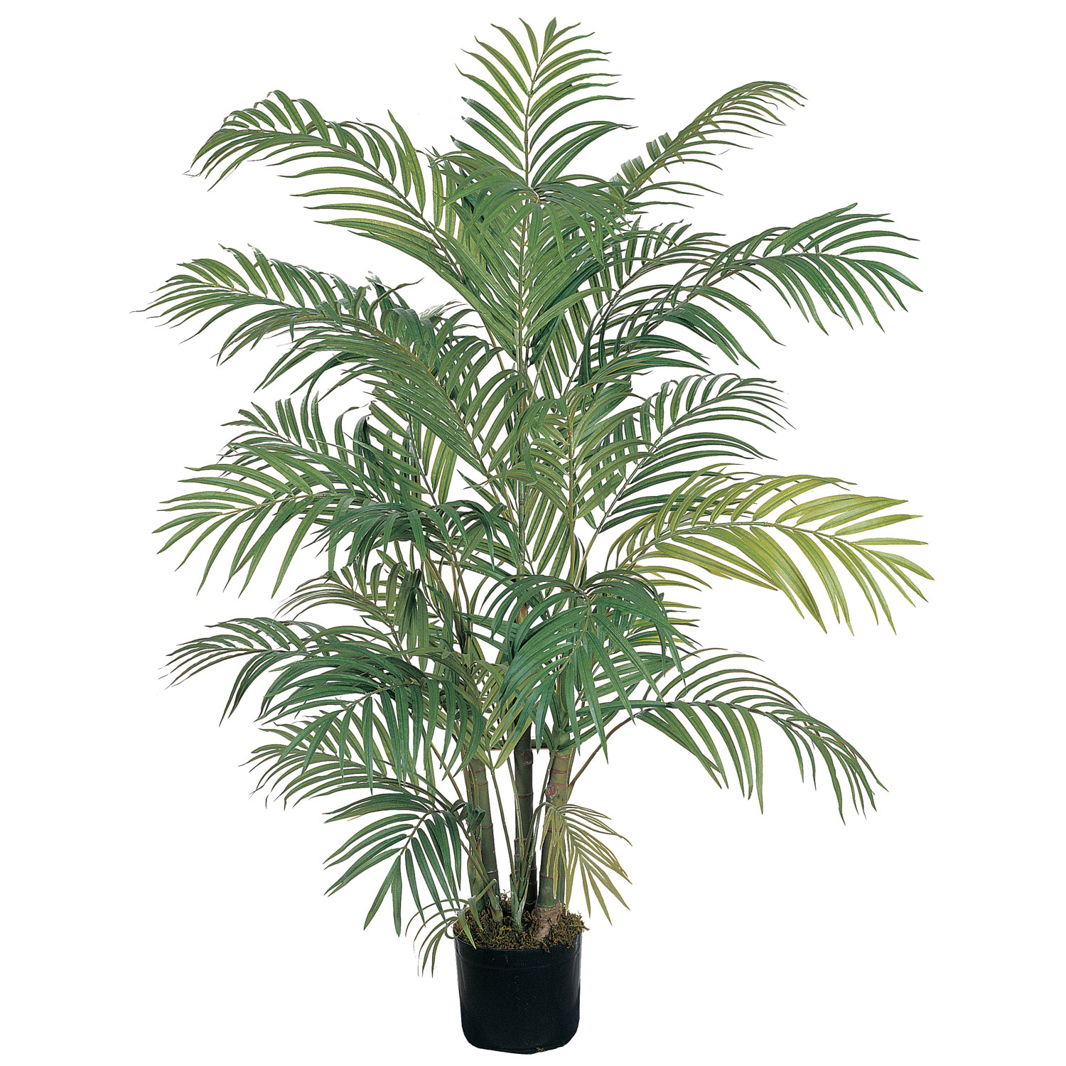 4 foot areca palm tree potted 5001 closeup image dhlflorist Gallery