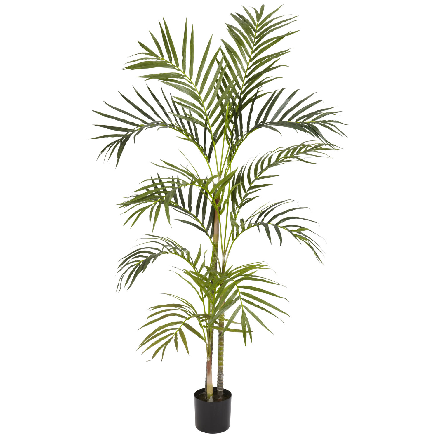 4 foot areca palm tree potted 5314 for Pictures of areca palm plants