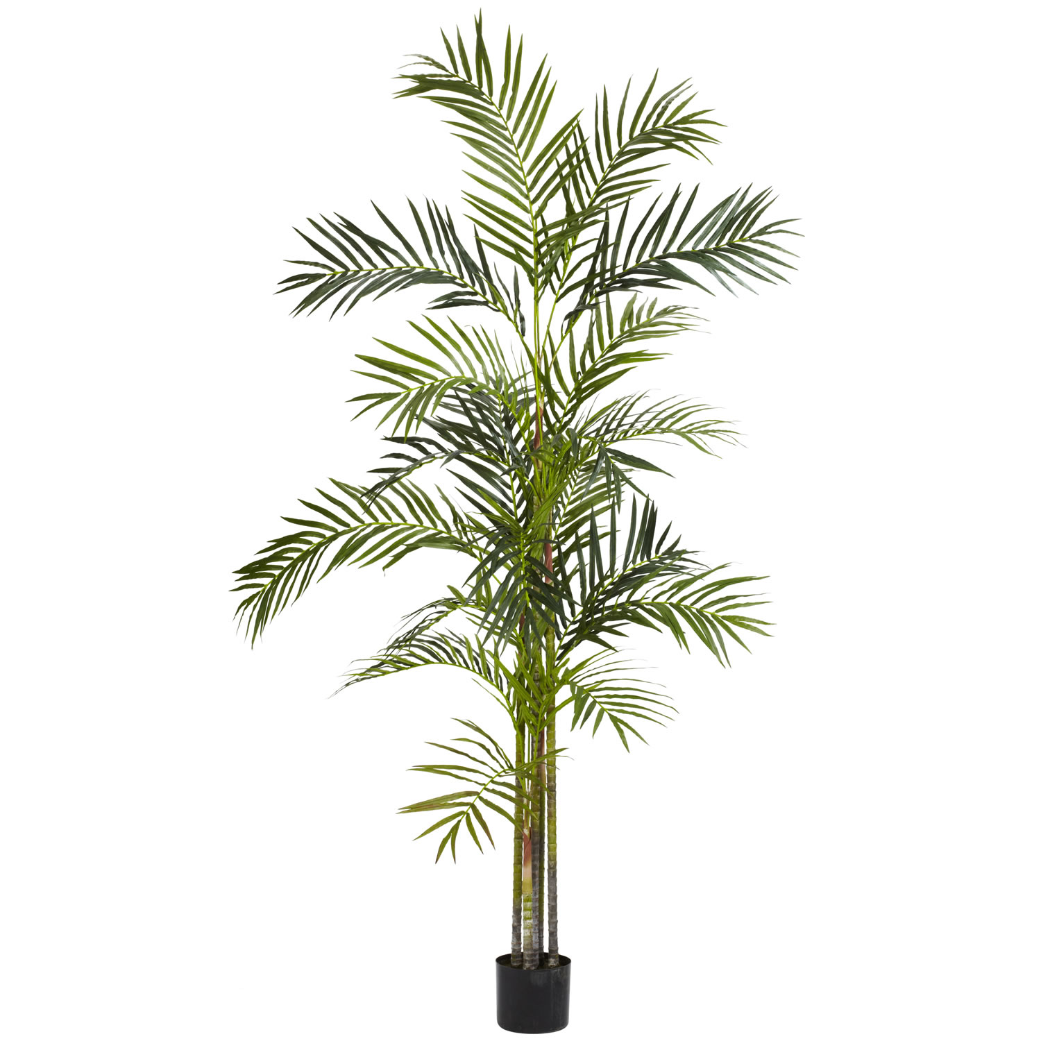 6 foot Areca Palm Tree: Potted | 5316