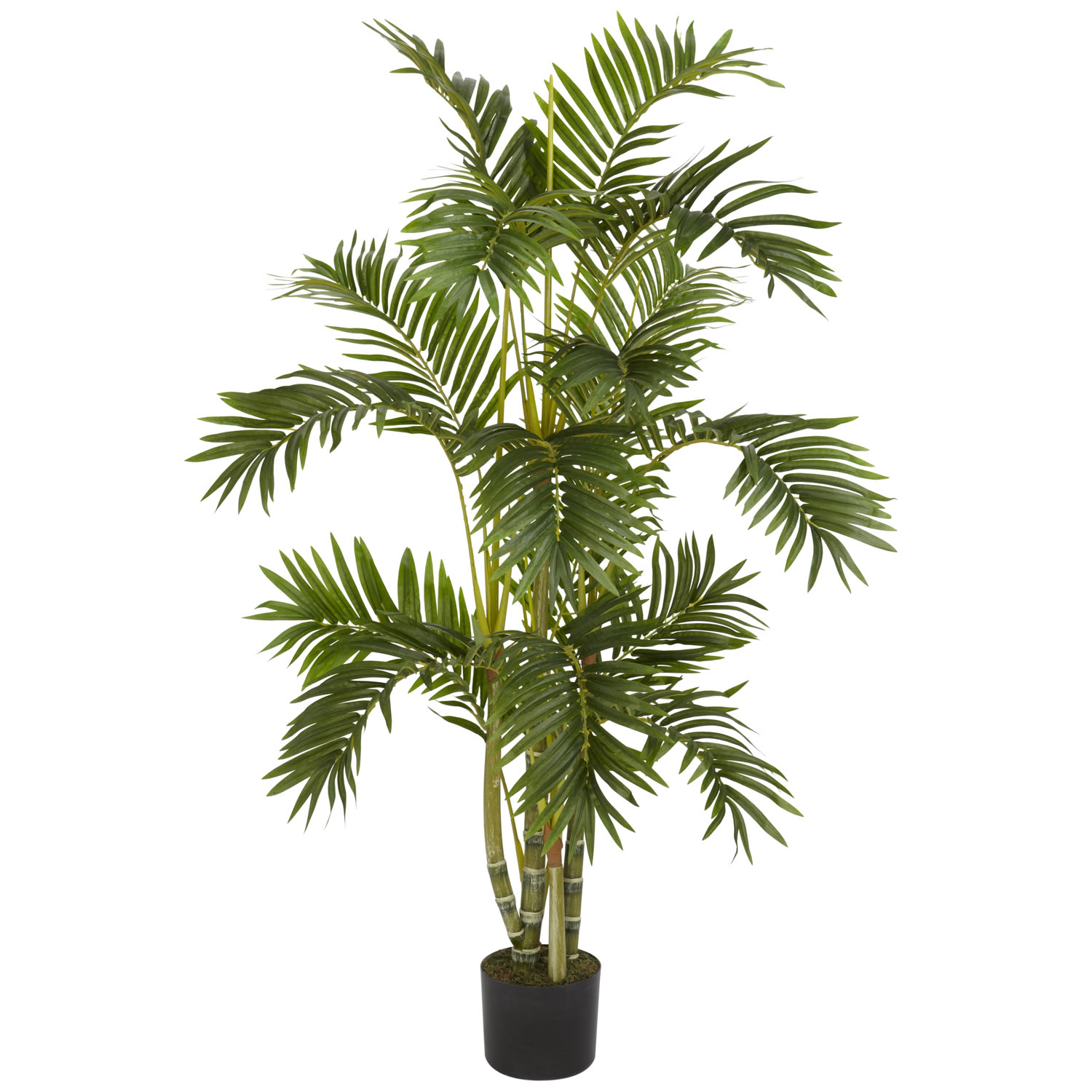 4 foot areca palm tree potted 5336 for Pictures of areca palm plants