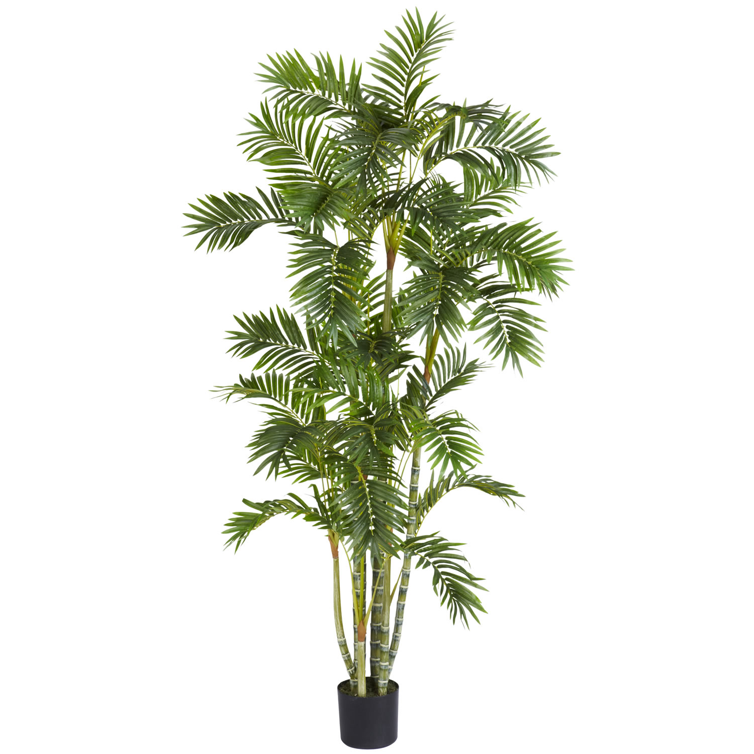 6 foot areca palm tree potted 5337 for Pictures of areca palm plants