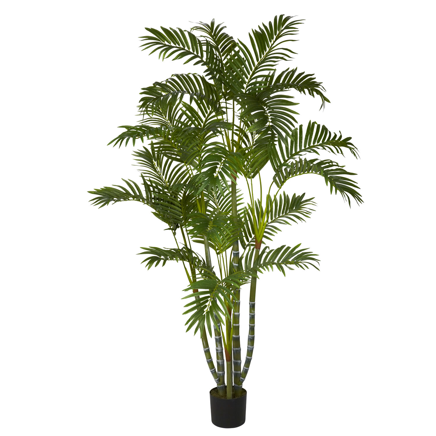 5 foot biggy style areca palm tree potted 5344. Black Bedroom Furniture Sets. Home Design Ideas