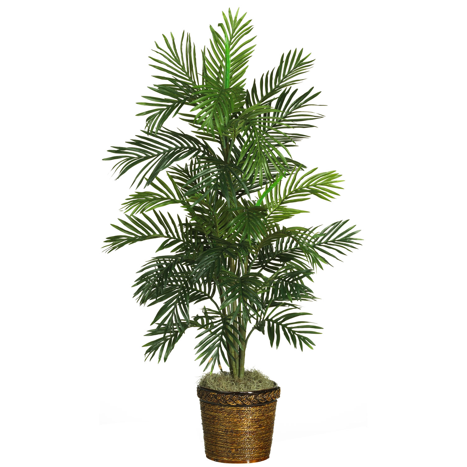 56 inch areca palm tree in basket 5263 0308 for Pictures of areca palm plants
