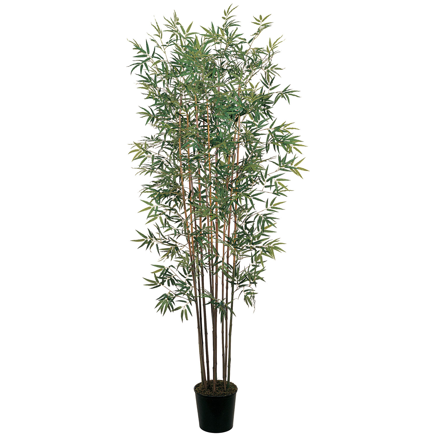 Lovable Mini Bamboo Tree Potted Product Photo