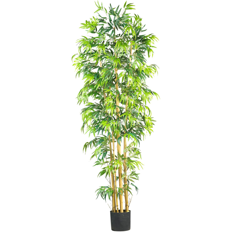 7 Foot Multi Bambusa Bamboo Tree Potted 5215