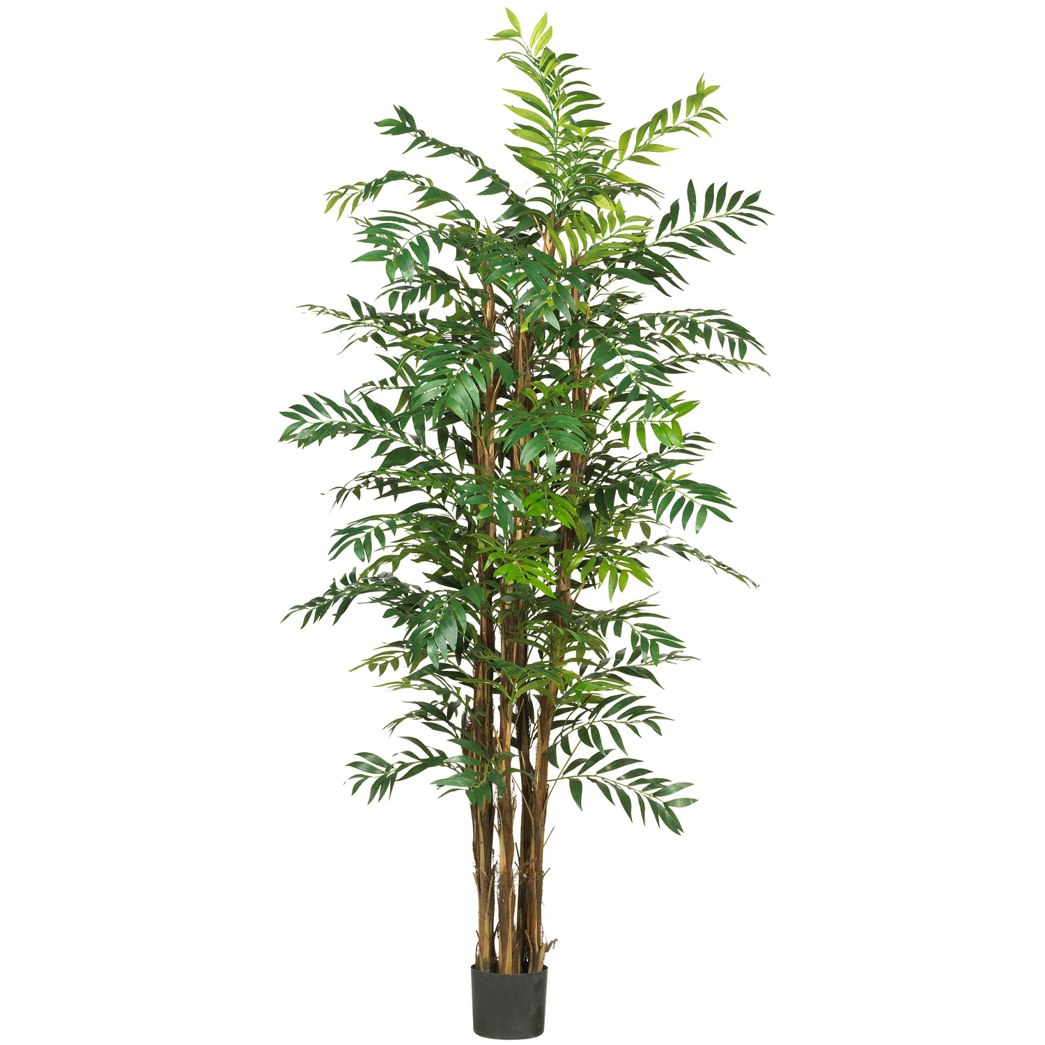 Popular Bamboo Palm Tree Potted Product Photo
