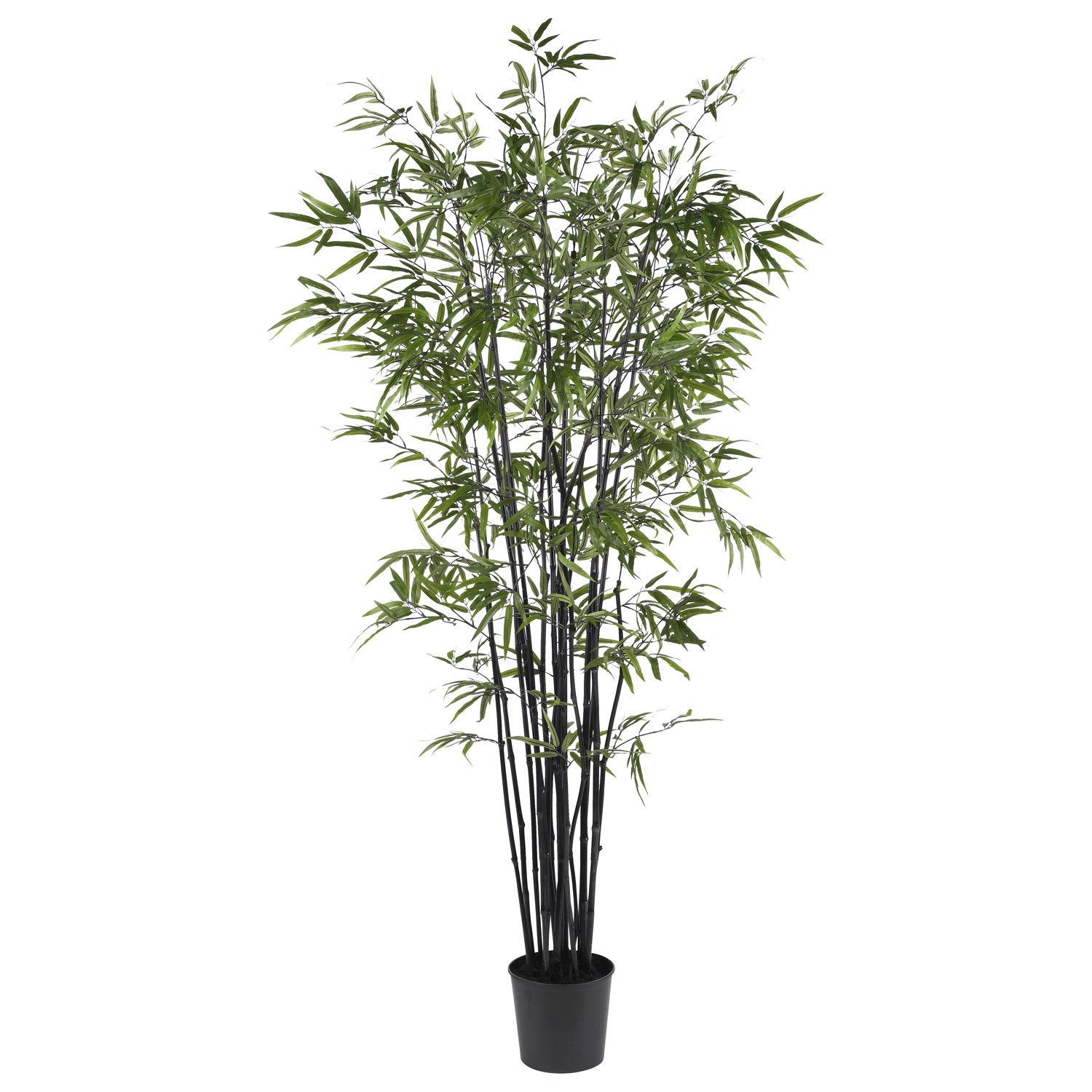 6 5 Foot Black Bamboo Tree Potted 5277