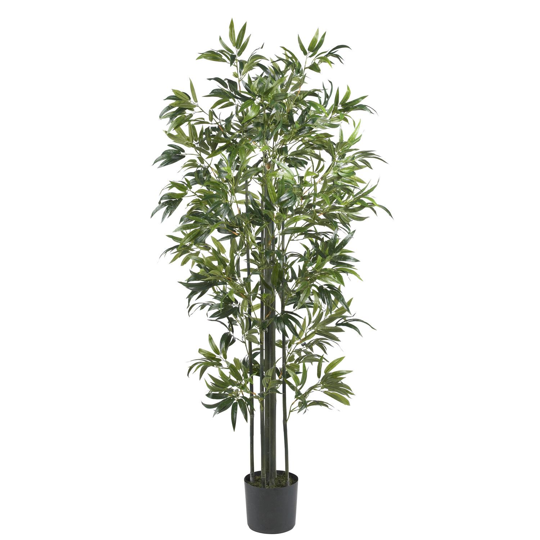 Einzelne Bambus Pflanz...