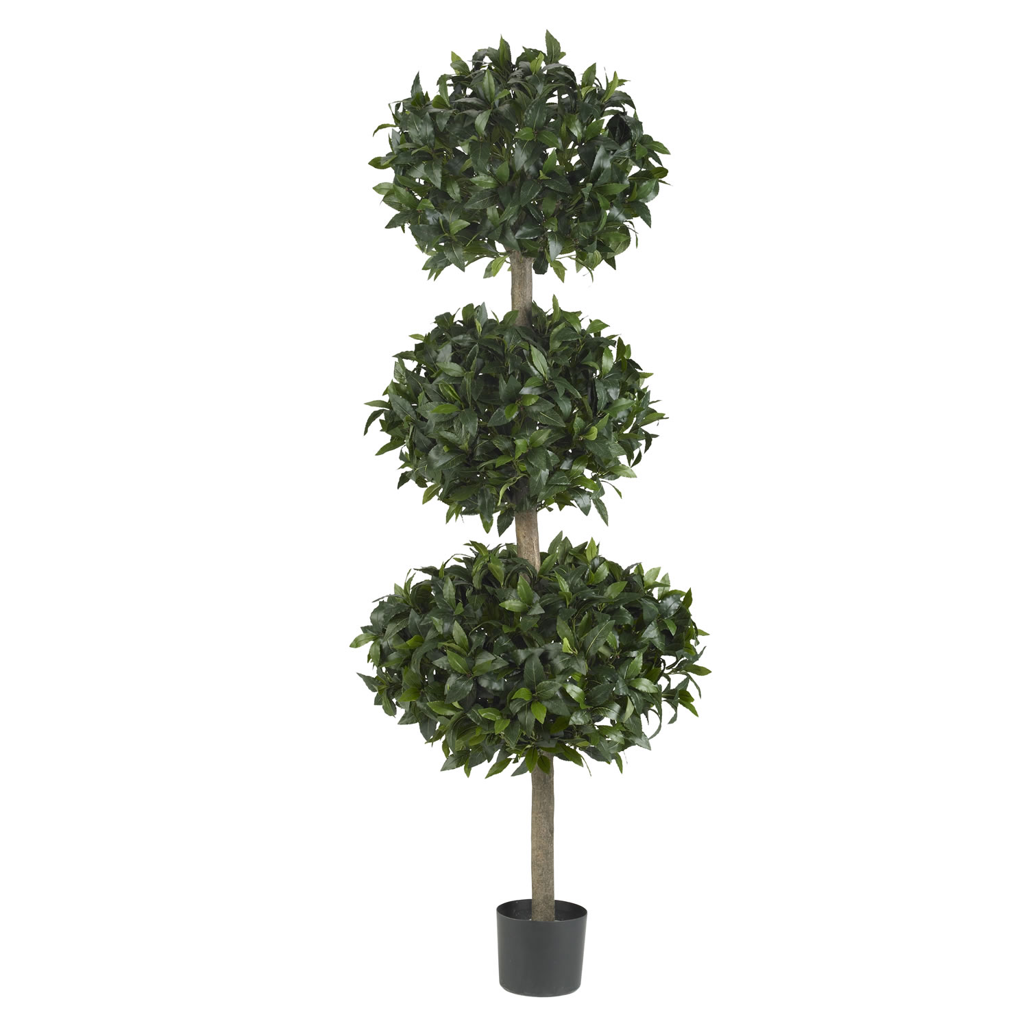 Purchase Sweet Bay Triple Ball Tree Potted Product Photo