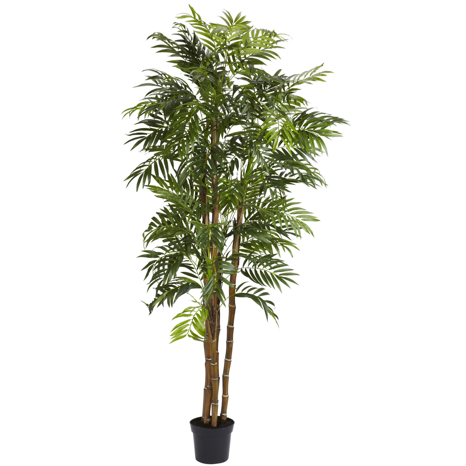 Info about Bella-Palm-Tree-Potted Product Picture 1135