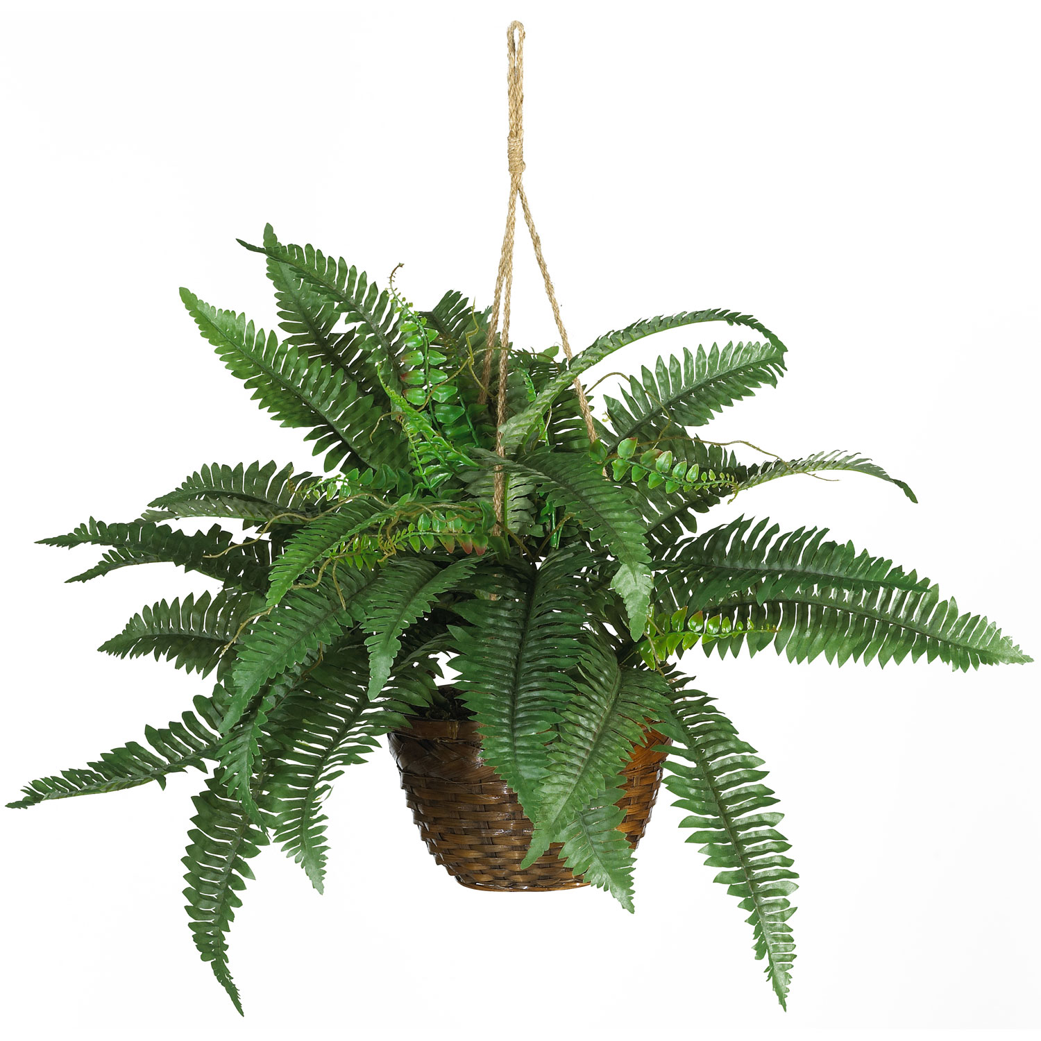 18 inch boston fern in hanging basket | 6599