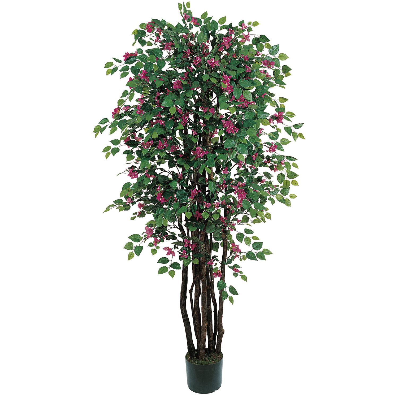 6 foot Multi Vine Bougainvillea Tree: Potted   5343