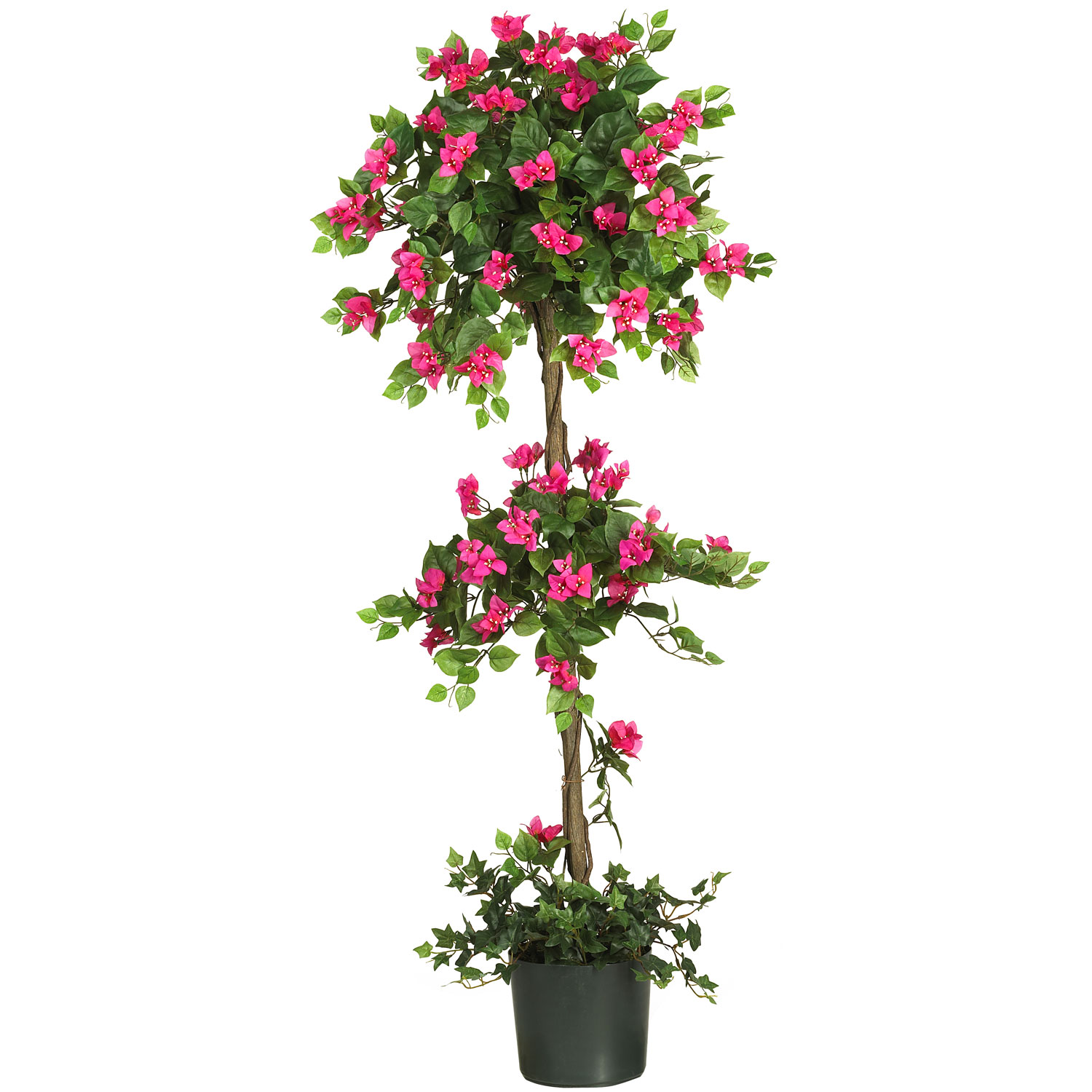 5 foot mini bougainvillea topiary potted 5228 closeup image dhlflorist Gallery