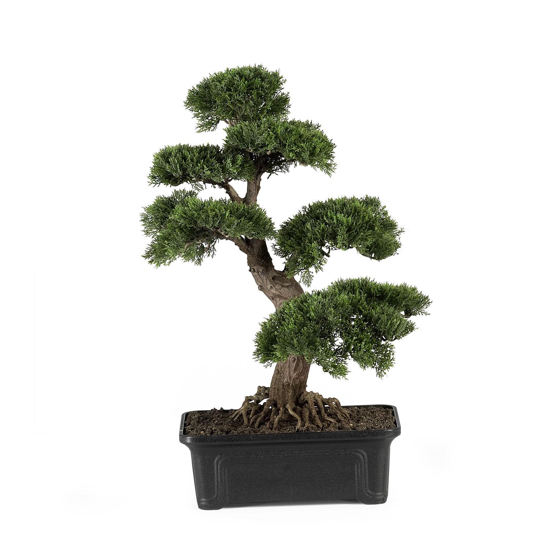 24 inch Cedar Bonsai | 4103