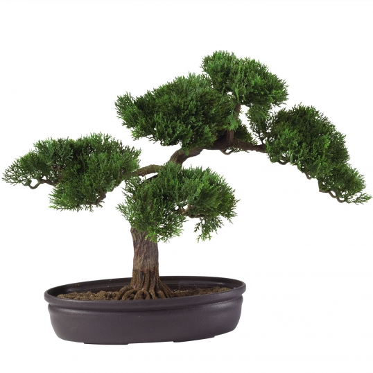 Fine 16 Inch Cedar Bonsai 4106 Wiring Digital Resources Funapmognl