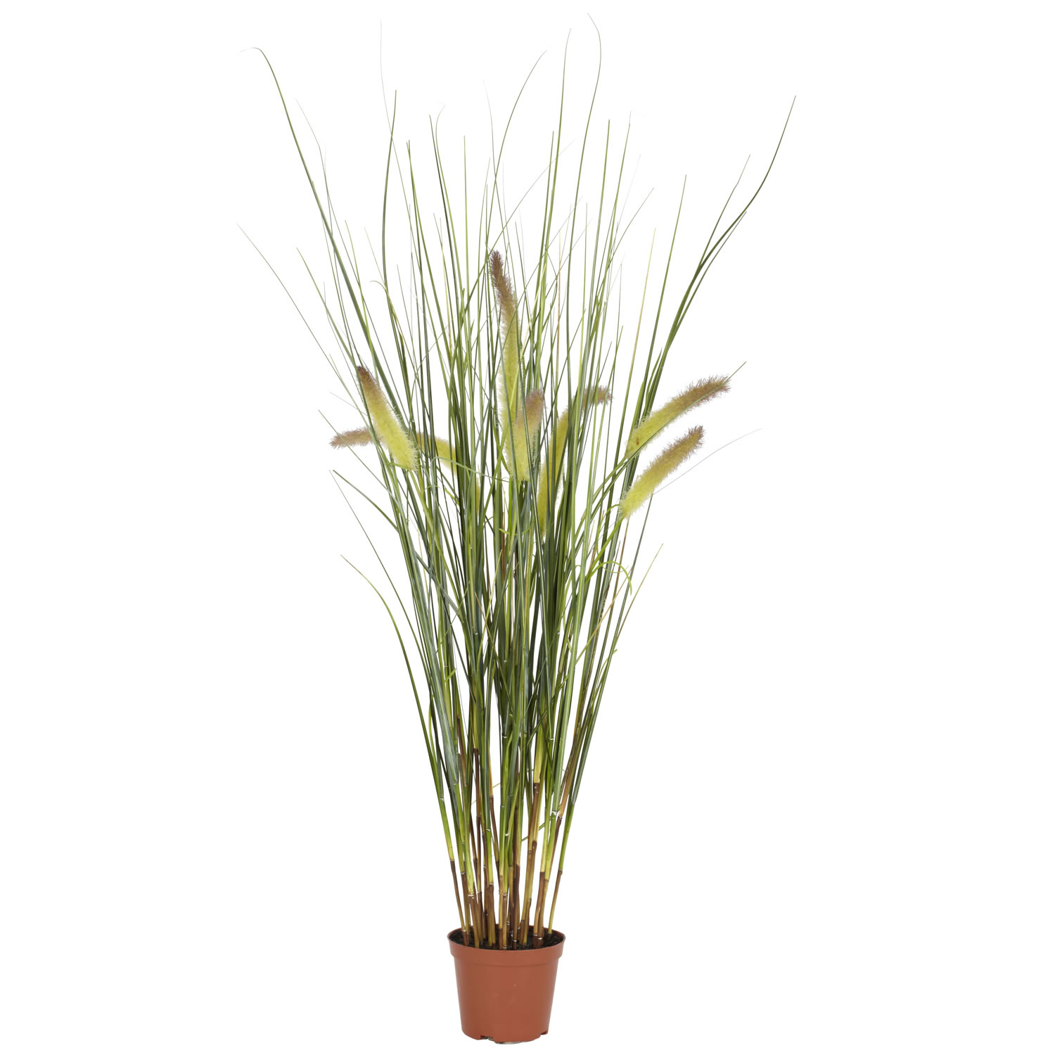 2 5 Foot Grass Plant Potted 6647