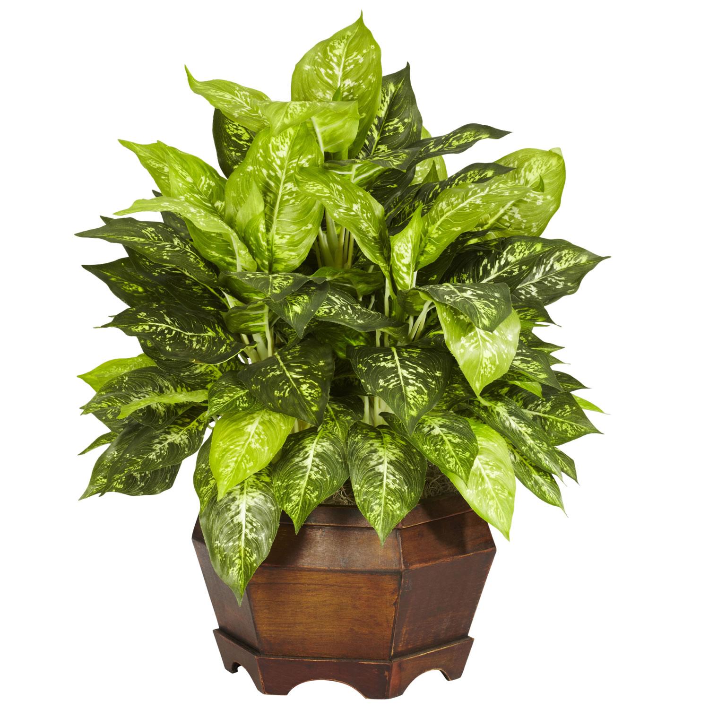 24 inch variegated dieffenbachia in large hexagon planter for Planta ornamental venenosa dieffenbachia